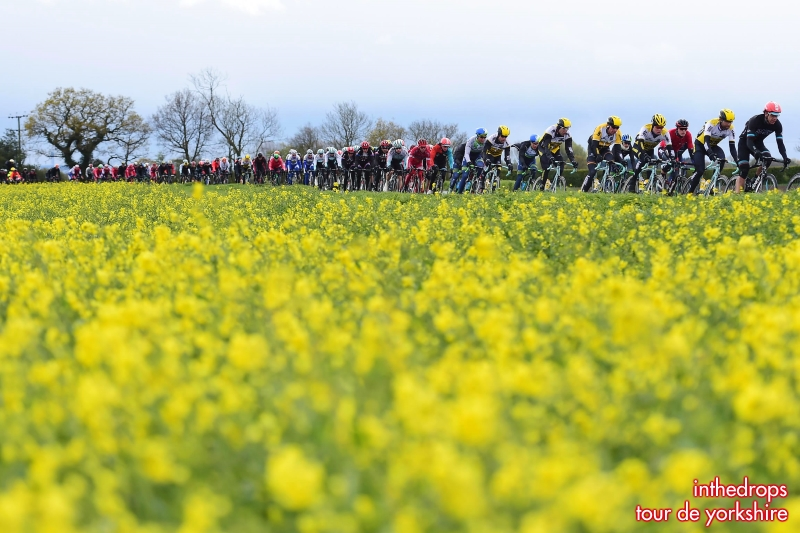 Peloton Yorkshire stage 1 2016 TDY